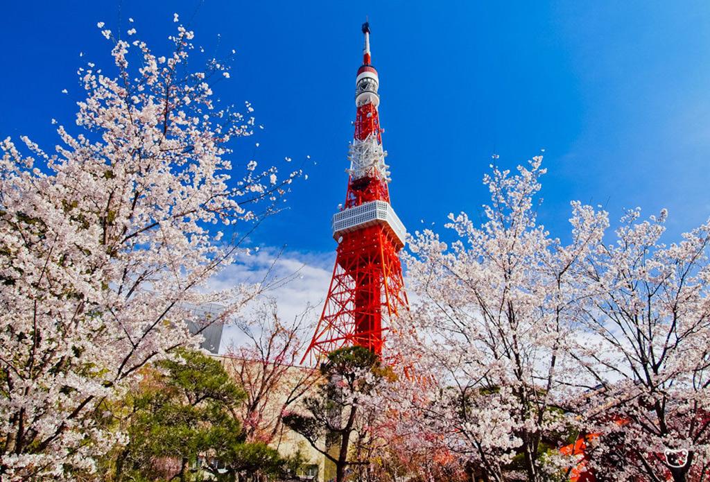 【拒签全退】日本三年多次签证加急办理